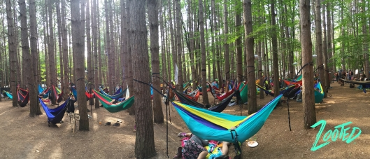 Hundreds of hammocks in the Sherwood Forest. ©Zooted.co